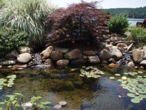 lake view pond